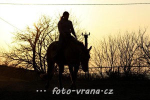 Koně 2012