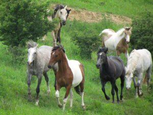 majitelsti kone