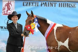 Paint show 2012 (sobota)
